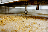 Barley grains in brew tank in small scale brewery