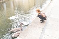 Woman by canal feeding swan, London, UK 11015296326  写真素材・ストックフォト・画像・イラスト素材 アマナイメージズ