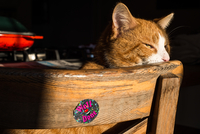 Cat relaxing on wooden chair