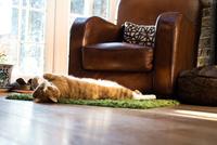 Cat relaxing on floor mat