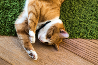 Cat relaxing on green rug