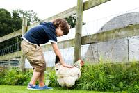 Boy petting chicken 11015296770| 写真素材・ストックフォト・画像・イラスト素材|アマナイメージズ