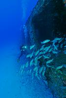 Scuba diver and school of fish by shipwreck, Cancun, Quintana Roo. Mexico 11015297294| 写真素材・ストックフォト・画像・イラスト素材|アマナイメージズ