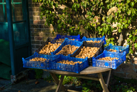 Crates of harvested walnuts on farm stall