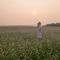 Female beekeeper inspecting plant in flower field at dusk, Ural, Russia 11015297703| 写真素材・ストックフォト・画像・イラスト素材|アマナイメージズ