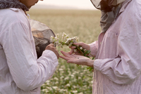 Cropped shot of male and female beekeepers inspecting plant in flower field, Ural, Russia 11015297707| 写真素材・ストックフォト・画像・イラスト素材|アマナイメージズ
