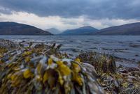 Loch Fyne, Inverary, Scotland