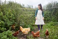 Woman wearing apron on chicken farm 11015297888| 写真素材・ストックフォト・画像・イラスト素材|アマナイメージズ