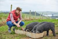 Man on farm feeding piglets 11015297914  写真素材・ストックフォト・画像・イラスト素材 アマナイメージズ