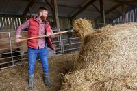 Man in barn shovelling hay 11015297922| 写真素材・ストックフォト・画像・イラスト素材|アマナイメージズ