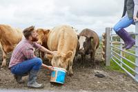 Man on farm feeding cow from bucket 11015297924  写真素材・ストックフォト・画像・イラスト素材 アマナイメージズ