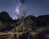 Joshua tree and starry night sky, Joshua Tree national park, California, USA 11015298030| 写真素材・ストックフォト・画像・イラスト素材|アマナイメージズ