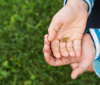 Hands of boy holding insect