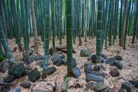 Bamboo forest in Arashiyama, Kyoto, Japan 11015298332| 写真素材・ストックフォト・画像・イラスト素材|アマナイメージズ