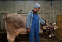Senior male dairy farmer petting cow in shed, Sattelbergalm, Tyrol, Austria