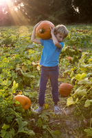 Young boy in pumpkin patch, carrying pumpkin