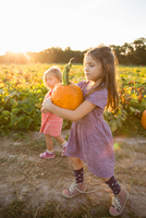 Young girl beside pumpkin patch, carrying pumpkin