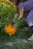 Young girl in pumpkin patch, lifting pumpkin