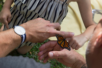 Father and daughter looking at monarch butterfly 11015300039| 写真素材・ストックフォト・画像・イラスト素材|アマナイメージズ
