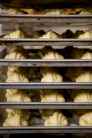 Raw croissants on tray, ready to be baked