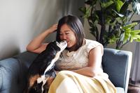 Dog licking mid adult woman's face on sofa 11015301469| 写真素材・ストックフォト・画像・イラスト素材|アマナイメージズ