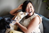 Mid adult woman pulling a face whilst being licked by dogs on sofa 11015301470| 写真素材・ストックフォト・画像・イラスト素材|アマナイメージズ
