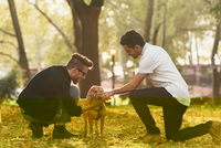 Young male couple petting dog in autumn park