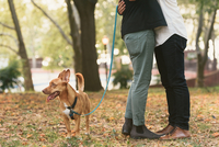 Waist down view of young male couple with dog hugging in  park