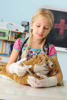 Girl pretending to be vet giving toy tiger syringe injection 11015302391| 写真素材・ストックフォト・画像・イラスト素材|アマナイメージズ