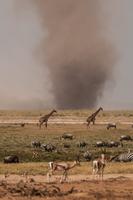 Dust tornado close to water hole where zebras, giraffes and gazelles drink, Masai Mara, Kenya