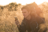 Young man in field, looking at smartphone