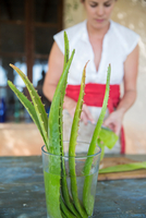 Woman scraping liquid from aloe leaf in handmade soap workshop 11015303997| 写真素材・ストックフォト・画像・イラスト素材|アマナイメージズ