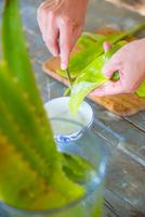 Female hand scraping liquid from aloe leaf in handmade soap workshop 11015303999| 写真素材・ストックフォト・画像・イラスト素材|アマナイメージズ