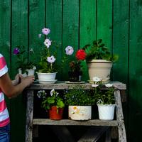 Woman arranging flower pot on rack 11015304237| 写真素材・ストックフォト・画像・イラスト素材|アマナイメージズ