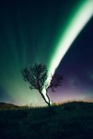 Aurora over tree top, Reykjavik, Iceland 11015304326| 写真素材・ストックフォト・画像・イラスト素材|アマナイメージズ