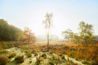 Nature reserve in the south of Holland, autumn morning, Noord-Brabant, Netherlands 11015304659| 写真素材・ストックフォト・画像・イラスト素材|アマナイメージズ