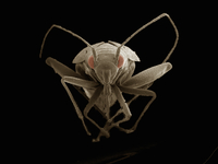 Scanning electron micrograph of a true bug (hemiptera)