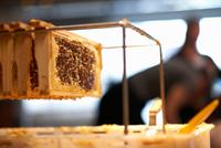 Fresh honeycomb in frame on shed bench 11015305806| 写真素材・ストックフォト・画像・イラスト素材|アマナイメージズ