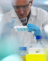 Biotechnology Research, scientist viewing samples in a multi well plate during an experiment in the laboratory 11015307579| 写真素材・ストックフォト・画像・イラスト素材|アマナイメージズ