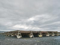 Racks of fish drying outdoor,  Reykjavik, Iceland