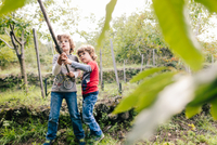 Two boys poking chestnut tree with pole in vineyard woods