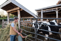 Father and daughter beside cow shed, daughter feeding hay to cow