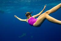 Underwater view of woman snorkeling with sea life, Oahu, Hawaii, USA 11015310751  写真素材・ストックフォト・画像・イラスト素材 アマナイメージズ