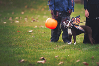 Friends in Halloween costumes with dog dressed as butterfly 11015310793| 写真素材・ストックフォト・画像・イラスト素材|アマナイメージズ