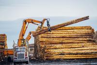 Heavy machinery, moving cut logs 11015312617| 写真素材・ストックフォト・画像・イラスト素材|アマナイメージズ