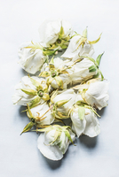 White rose heads, arranged upside-down, elevated view 11015313422| 写真素材・ストックフォト・画像・イラスト素材|アマナイメージズ