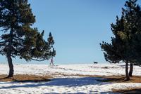 Man walking dog in snow covered horizon 11015313868| 写真素材・ストックフォト・画像・イラスト素材|アマナイメージズ