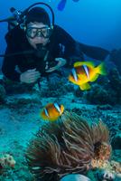 Scuba diver looking at Clownfish (amphiprion bicinctus), Marsa Alam, Egypt 11015314280| 写真素材・ストックフォト・画像・イラスト素材|アマナイメージズ