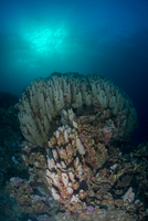 Corals, Red Sea, Marsa Alam, Egypt 11015314288| 写真素材・ストックフォト・画像・イラスト素材|アマナイメージズ