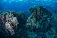 Corals, Red Sea, Marsa Alam, Egypt 11015314291| 写真素材・ストックフォト・画像・イラスト素材|アマナイメージズ